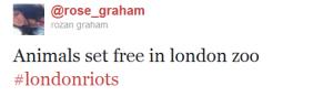animals set free in london zoo